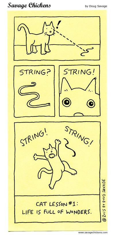 Cat Lesson