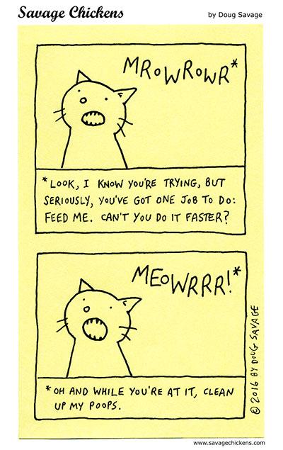 Cat Translation