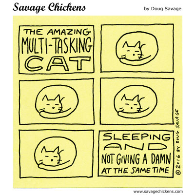 Multi-Tasking Cat