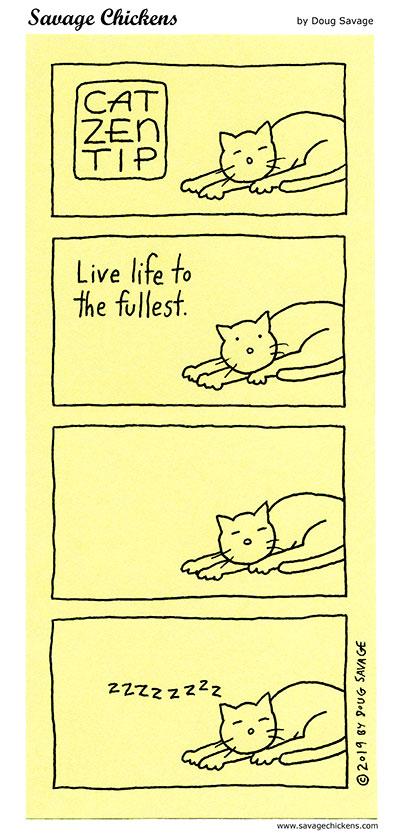 Cat Zen Tip 5