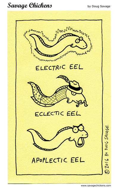 Know Your Eels