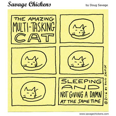 Multi-Tasking Cat